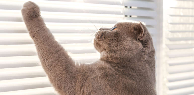 How to make your window blinds last longer